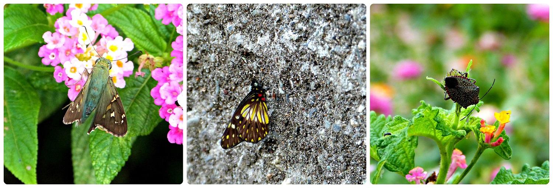 Photos des insectes rencontrés au Musée de l'Or d'Armenia