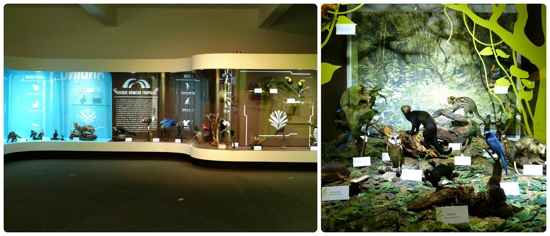 Vitrinas del museo de historia natural de Manizales