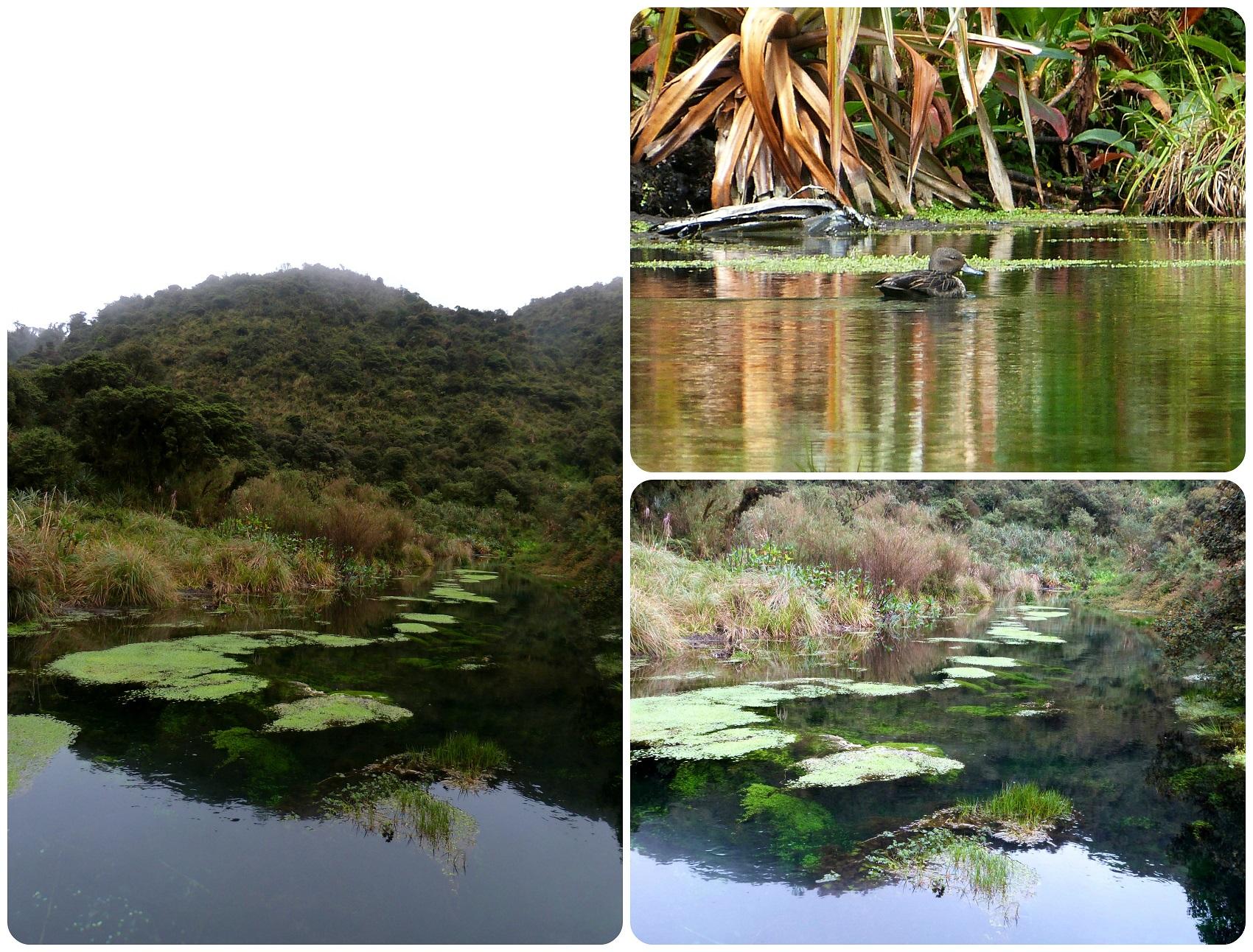 cours d'eau au Parc naturel Puracé