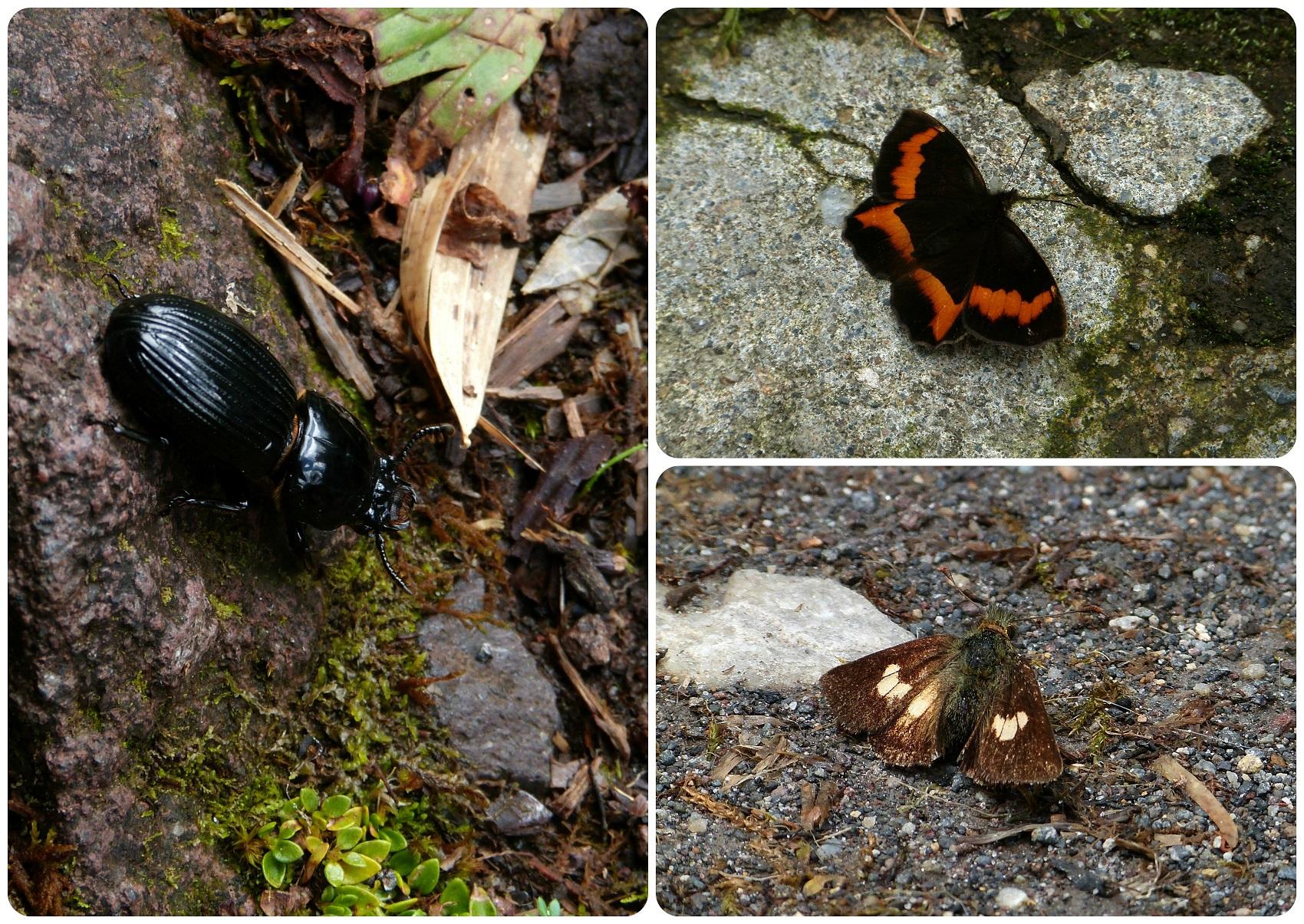 Insectes sur le chemin vers les thermes de san juan au parc naturel Puracé