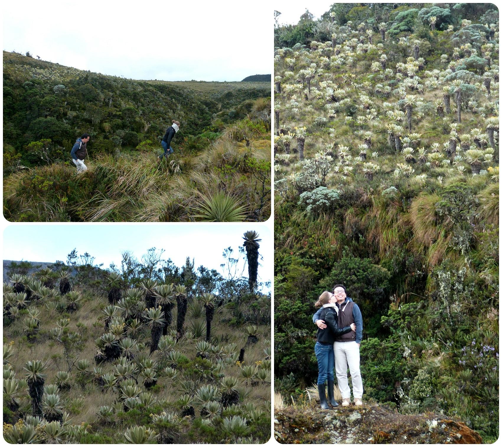 paysages du paramo au parc naturel puracé