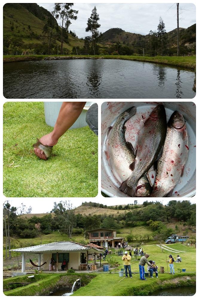 pêche de la truite à silvia