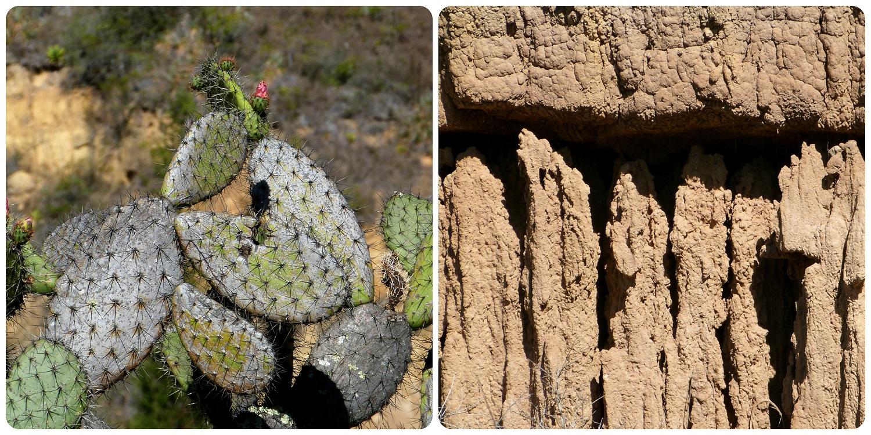 cactus et zoom sur la fortification du sable au désert de la Tatacoita de Nemocón