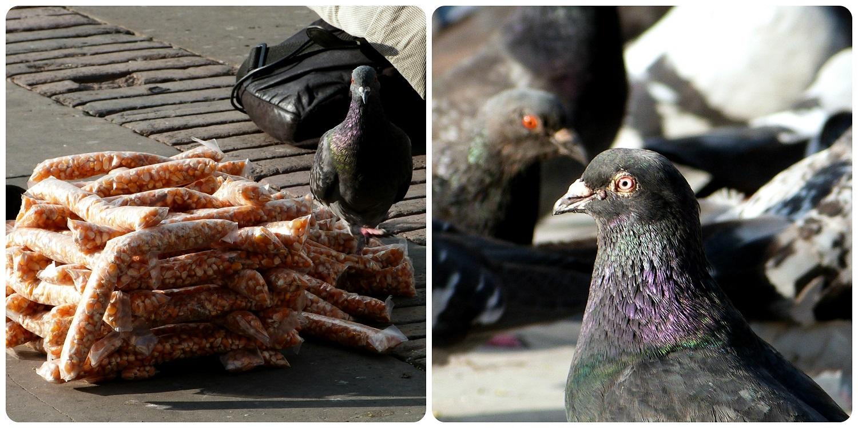 Pigeons sur la plaza Bolivar de Bogotá
