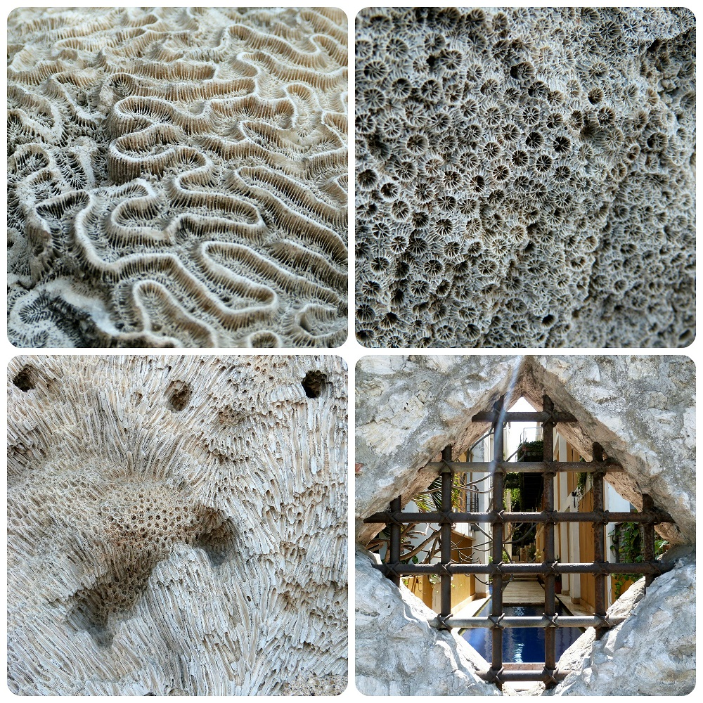 texturas muy es visibles de conchas fosilizadas en la piedra y vista de una piscina de una casa a través de una reja en Cartagena